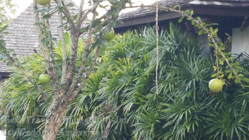 SeCeTravel-20150112-Phuket-233