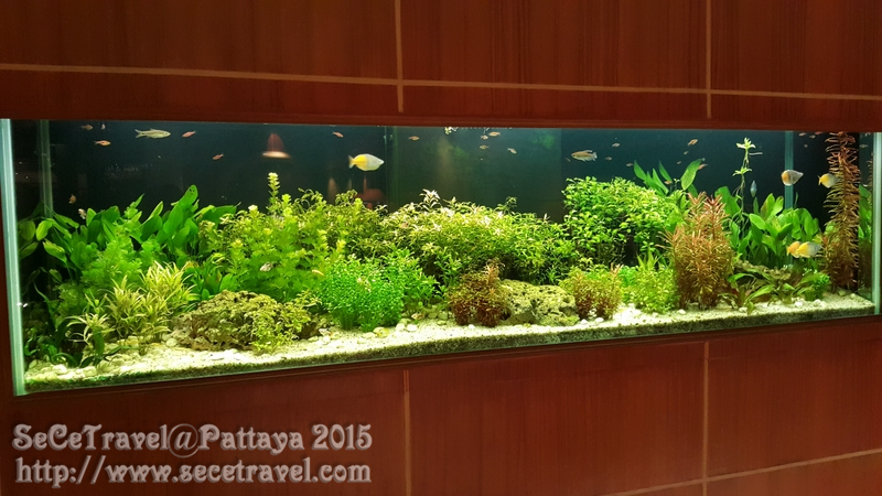 SeCeTravel-20150219-Pattaya-29