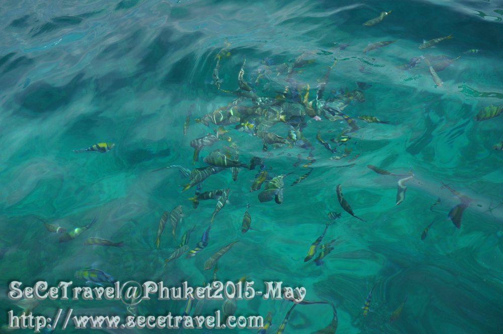 SeCeTravel-20150509-Puket-77