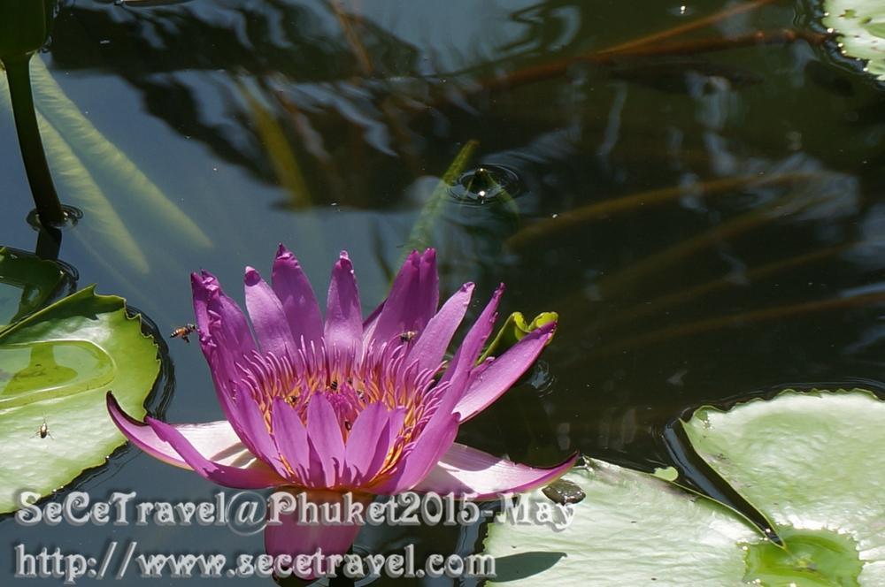 SeCeTravel-Phuket-20150514-36