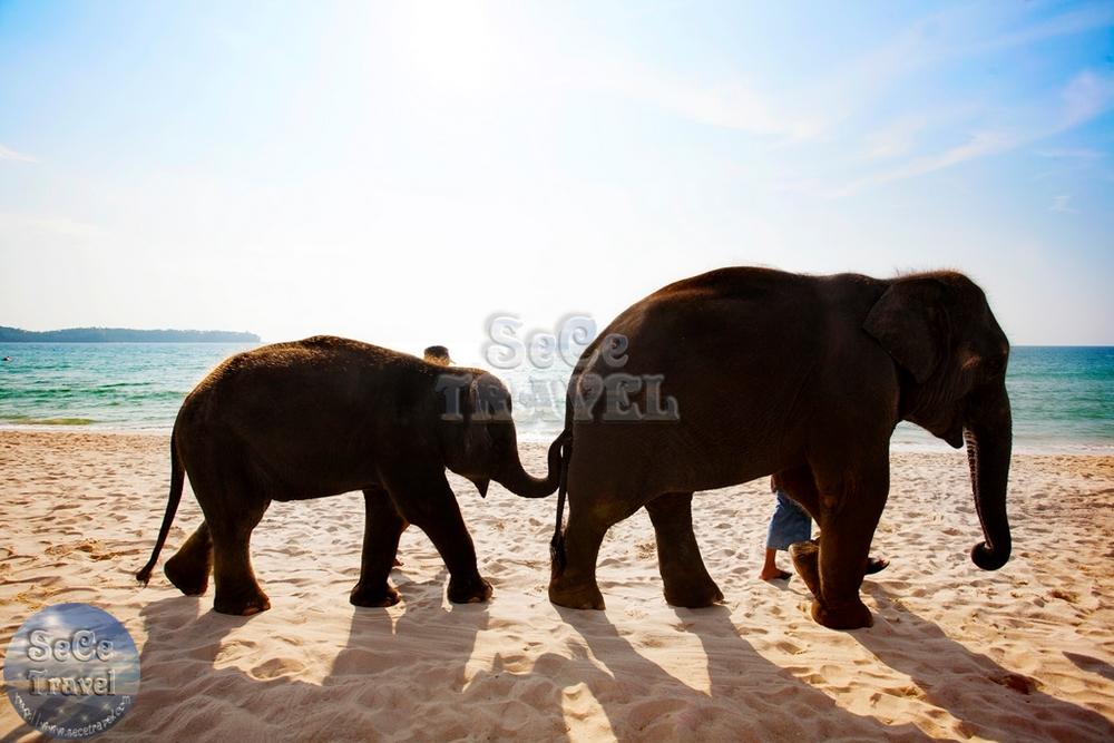 Angsana Laguna Phuket-小象-1