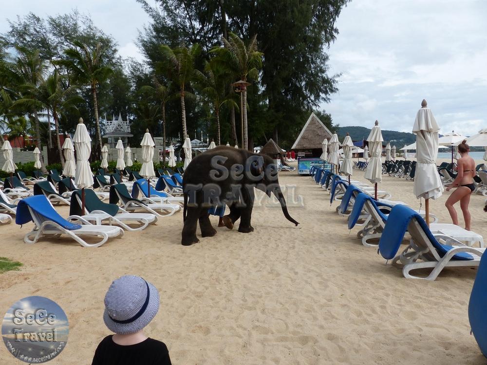 Angsana Laguna Phuket-小象-3