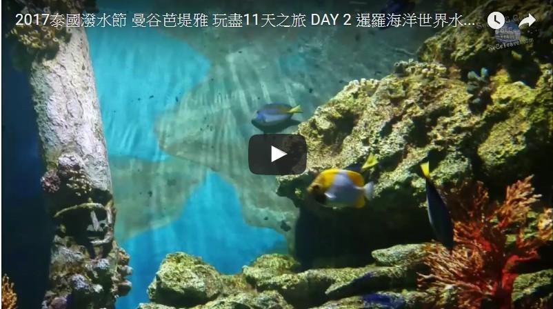SeCeTravel-2017泰國潑水節-曼谷芭堤雅-玩盡11天之旅-DAY-2-暹羅海洋世界水族館-Part-1