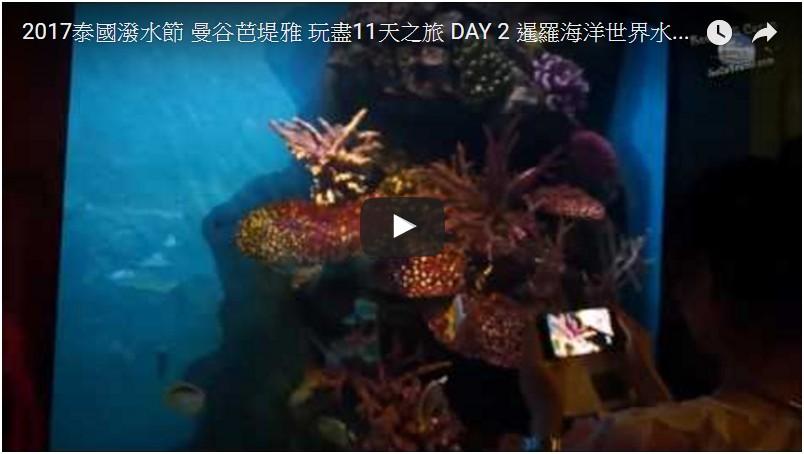 SeCeTravel-2017泰國潑水節-曼谷芭堤雅-玩盡11天之旅-DAY-2-暹羅海洋世界水族館-Part-3