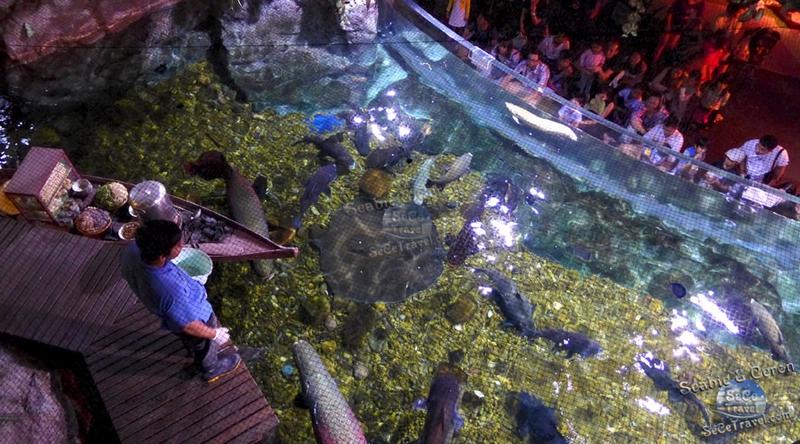 SeCeTravel-2017潑水節-海洋世界水族館-1