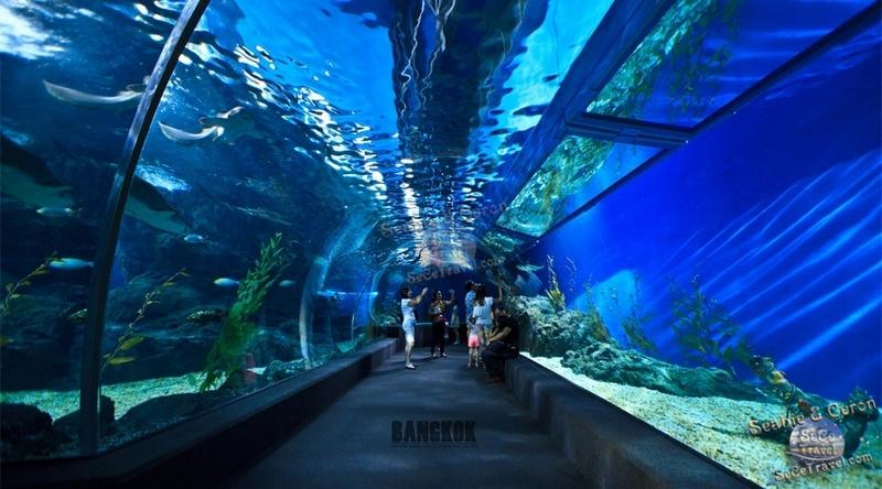 SeCeTravel-2017潑水節-海洋世界水族館