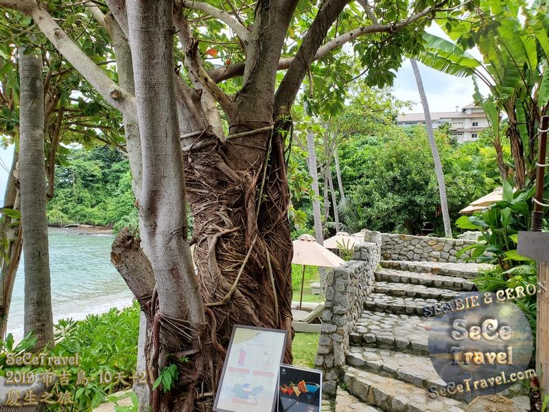 SeCeTravel-2019布吉島10天+2慶生之旅-20191017-6028