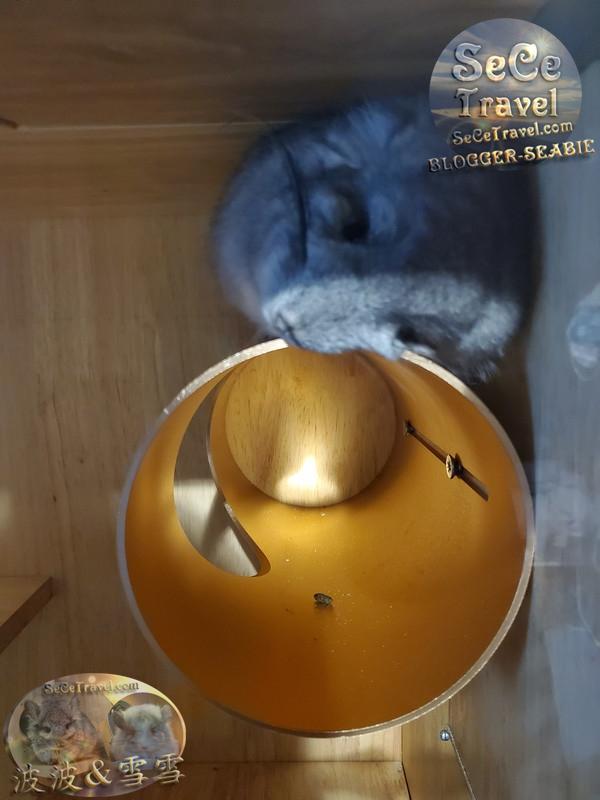 SeCeTravel-波波到家2個半月-櫃籠加裝空調-20201014-025